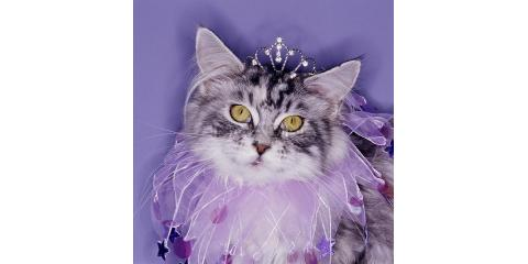 Feline Wellness Month, Waynesboro, Virginia