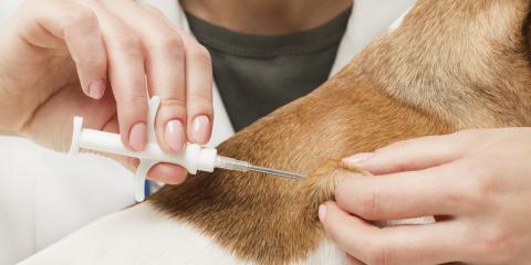Dispelling 5 Rumors About Pet Microchipping, Batavia, Ohio