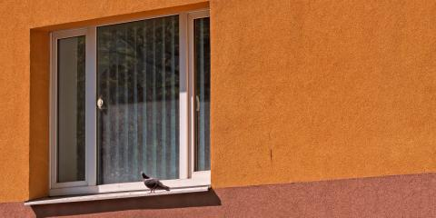 3 Ways to Birdproof Your Home Windows, Fairbanks, Alaska