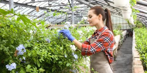 5 Types of Flower Fertilizer You Should Know, Fairfield, Connecticut