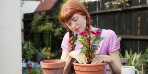5 Steps to Repot Your Plants Properly, Fairfield, Connecticut