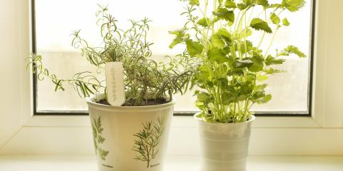 Your Guide to Indoor Gardening: 5 Herbs That Thrive Inside, Fairfield, Ohio