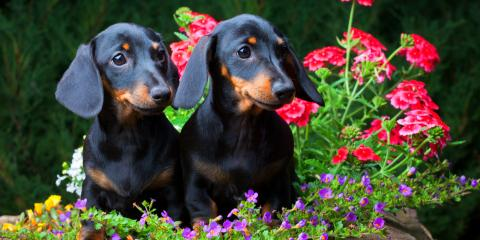 5 Garden Plants Pet Owners Should Avoid, Fairfield, Ohio