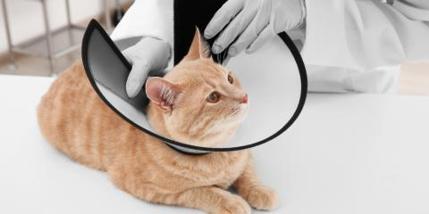 4 Tips for Helping Your Pet Adjust to an E-Collar, Fairfield, Ohio