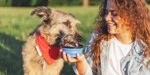 What Type of Water Is Best for Pets?, Fairfield, Ohio
