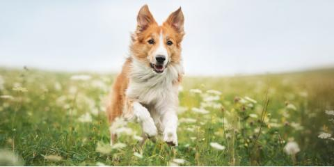 4 Reasons to Schedule Teeth Cleanings for Your Dog, Fairport, New York