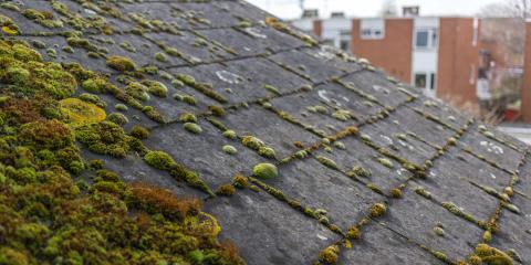 Guide to Algae & Moss on Roofs, ,