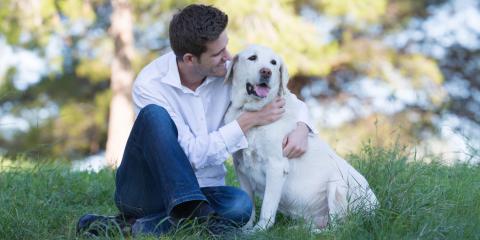 5 Senior Pet Care Tips, Fairport, New York