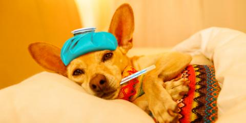 Is Your Dog Sick? Here's When to Call a Veterinarian, Fairport, New York