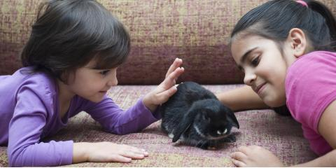 5 Helpful Tips to Care for Your Pet Rabbit, Fairport, New York