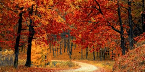 Use These 5 Fall Colors To Update Your Home Decor For Autumn!, Concord, Missouri