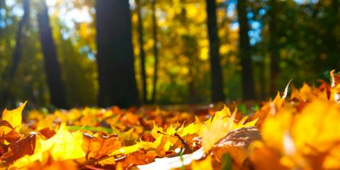 Trees for Fall Planting – Fast Growing and Easily Transplanted Trees, Nicholasville, Kentucky