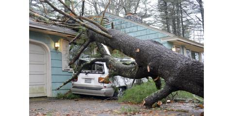 5 Things you want to know about your insurance coverages and fallen tree's. , Albemarle, North Carolina
