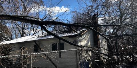 3 Steps to Handle Storm Damage From Fallen Trees , ,