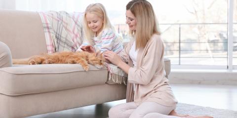 What Happens to Pets During a Divorce?, Torrington, Connecticut