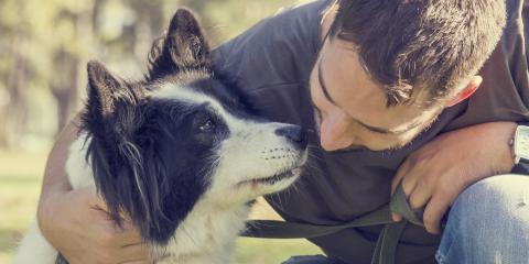 How Do Connecticut Courts Handle Pets in Divorce?, Torrington, Connecticut