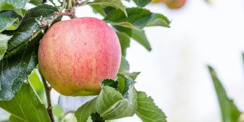 4 FAQ About Caring for Fruit Trees in Nebraska, Lincoln, Nebraska