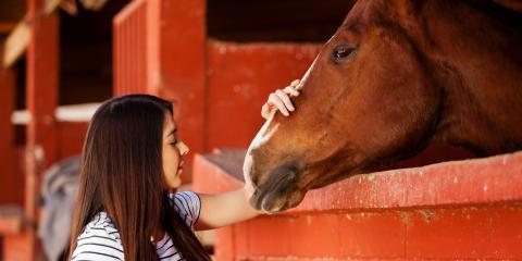 4 Barn Tools Every Horse-Owner Needs, Bolivar, Missouri