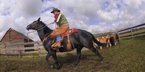 What's the Difference Between English & Western Horseback Riding?, Whiteville, Arkansas