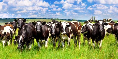 What You Need to Know About Farm Insurance, Marietta, Ohio