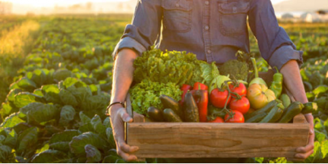 4 Benefits of Shopping at a Farmers' Market, Jacksonville, Arkansas