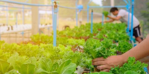 5 Trending Fruits & Vegetables to Grow, Genoa, Michigan