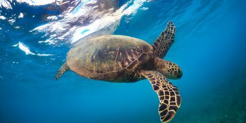 Fauna You Might Find While Paddleboarding the Anahulu River, Waialua, Hawaii