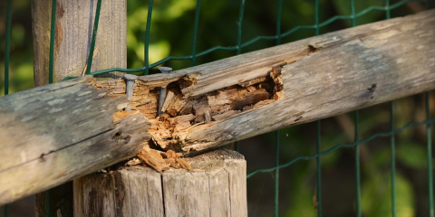 5 Signs You Have a Termite Problem, Fayetteville, Tennessee