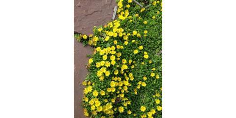 Xeric plant tips, Parker, Colorado