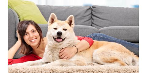 Pet Odor Removal Experts, Hinesville, Georgia