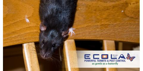Make Your New Year's Resolution a Pest-Free Home, Orcutt, California