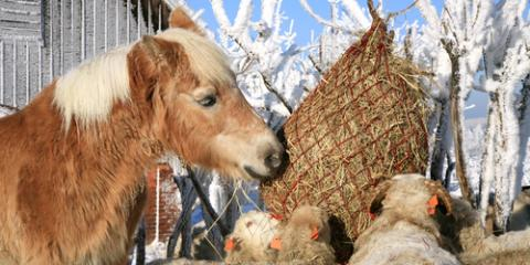 5 Tips to Feed Your Horses Well This Winter, Adams, Wisconsin