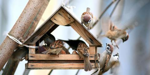 3 Helpful Bird Feeding Tips, Whiteville, Arkansas