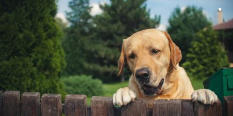 What to Consider Before Building a Pet Fence, Dothan, Alabama