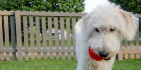 3 Factors To Consider When Installing a Fence for Your Dog, 8, Louisiana