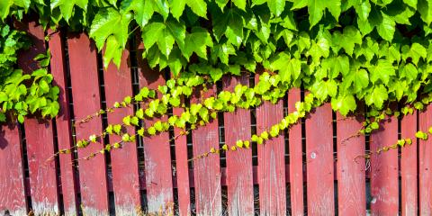 3 Tips to Choose Climbing Plants for Your New Fence Installation, Ewa, Hawaii