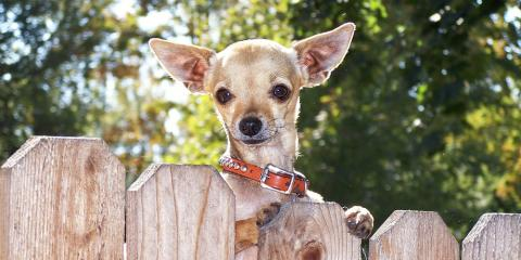 3 Types of Fencing Perfect for Dogs, Green, Ohio