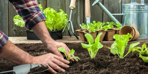 A Guide to Planning & Planting a Vegetable Garden, Robertsdale, Alabama