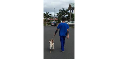 3 Reasons to Choose Waipahu Waikele Pet Hospital for Pet Boarding, Ewa, Hawaii