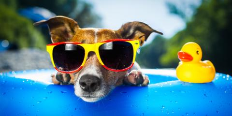 Follow These 3 Tips for Planning a Pet-centric Vacation!, Pagosa Springs, Colorado