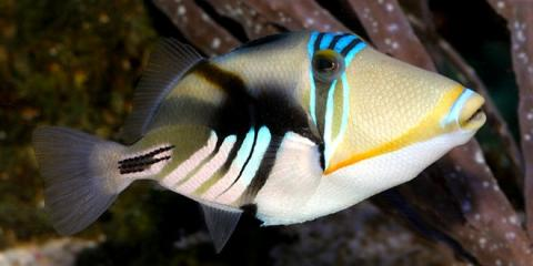 5 reef compatible fish that are easy to care for moraine for Easy to take care of fish