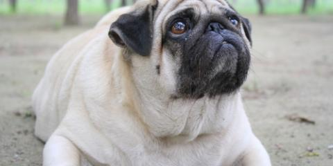 A Pet Care Guide to Healthy Weight Management, Fishersville, Virginia