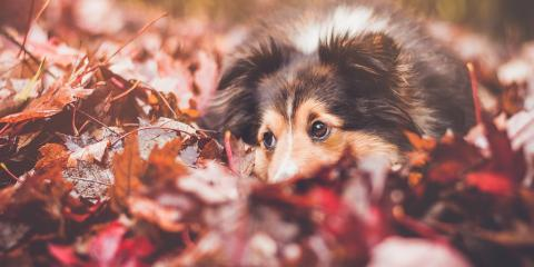 5 Ways You Can Protect Your Pets This Autumn , Freehold, New Jersey