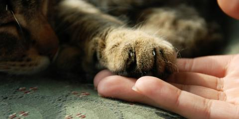 Declawing Cats: 5 Myths Debunked, Flatwoods-Russell, Kentucky