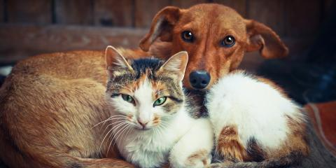 5 Veterinarian-Approved Reasons to Adopt an Animal, Flatwoods-Russell, Kentucky