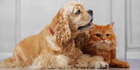 Veterinarian Perspective: Can Cats & Dogs Happily Coexist?, Flatwoods-Russell, Kentucky