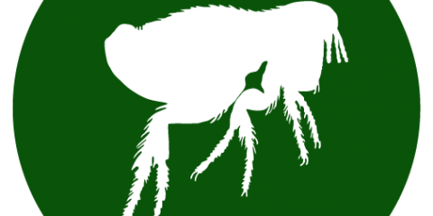 FLEAS? PEST CONTROL /EXTERMINATOR, Mobile, Alabama