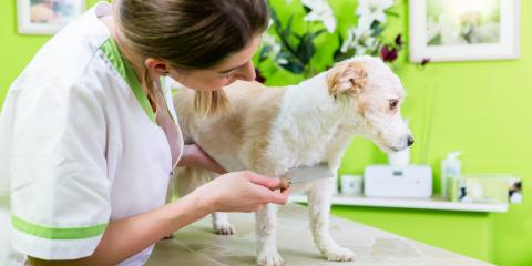 A Guide to Winter Flea & Tick Control, Troy, Missouri