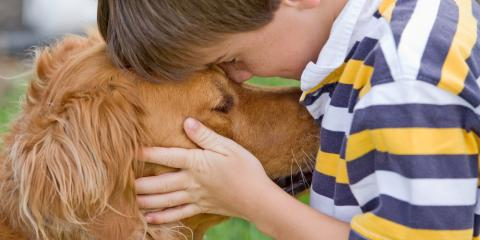 How to Keep Your Kids Safe After Applying Flea & Tick Medication to Your Pets, Southgate, Kentucky