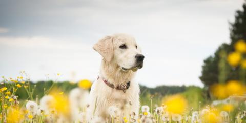 Flea & Tick Control for Dogs: What You Need to Know, Wentzville, Missouri